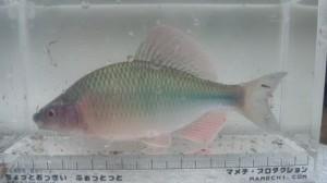 dvc00159