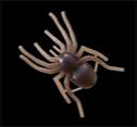 Sexy Spider
